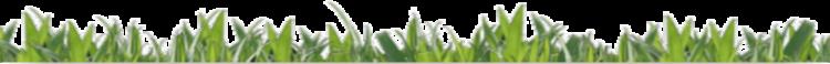 trennlinie-grass-klein
